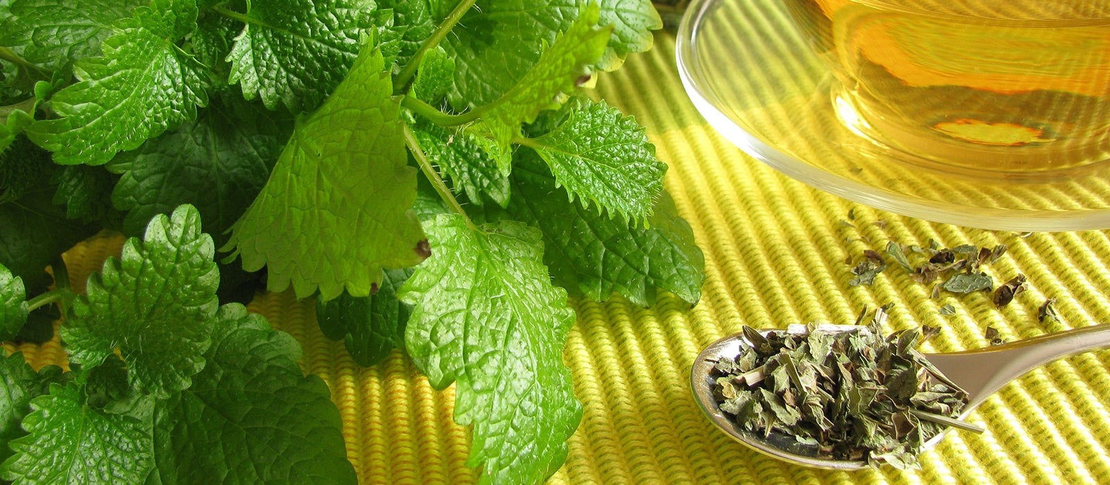 What Lemon Balm can bring to your Herbal Life